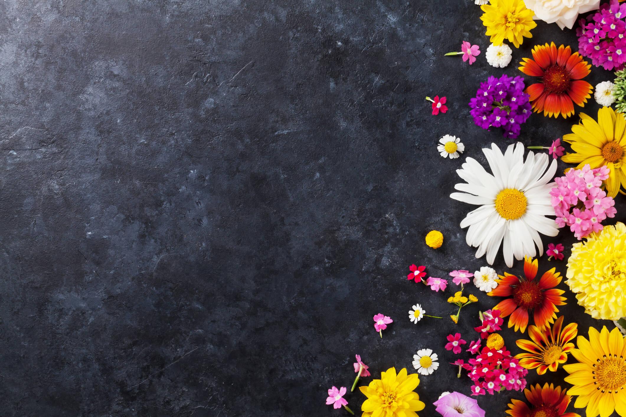 fleurs cdd compressé