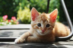 Red_Kitten_01